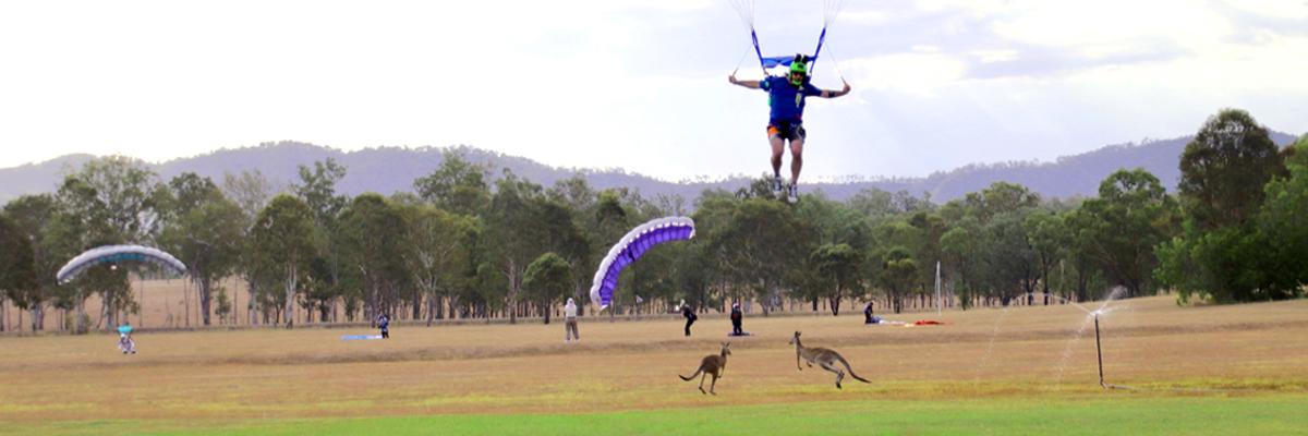 Skydivers and kangaroos in the landing area at Skydive Ramblers